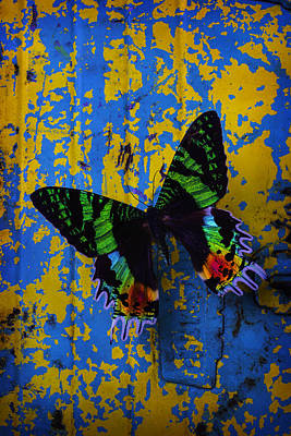 Beaten Up Photograph - Beautiful Butterfly On Painted Wall by Garry Gay
