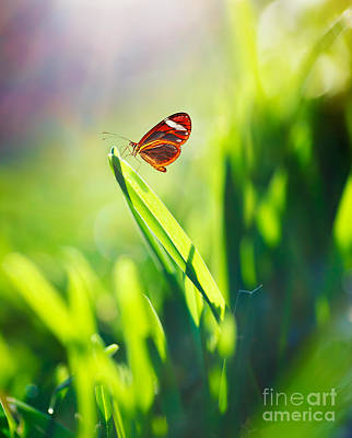 Photograph - Beautiful Butterfly On The Field by Anna Om
