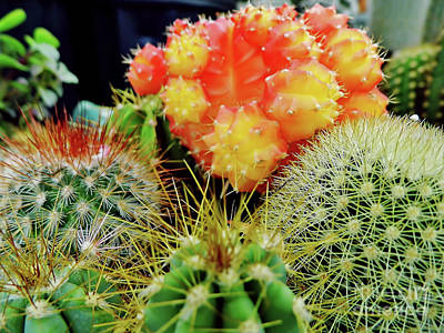 Photograph - Beautiful Cactus by D Hackett