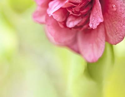 Photograph - Beautiful Camellia Macro Drops 1 by Marianne Campolongo