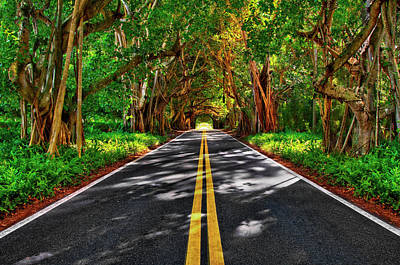 Photograph - Beautiful Canopy Tree Covered Road In Florida by Justin Kelefas