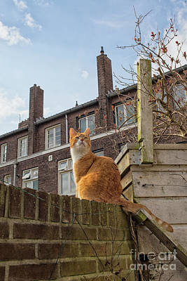 Photograph - Beautiful Cat On Wall by Patricia Hofmeester