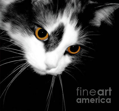 Photograph - Beautiful Cat With Orange Colored Eyes by Vizual Studio