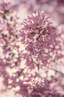 Cherry Blossoms Photograph - Beautiful Cherry Blossoms by Diane Diederich