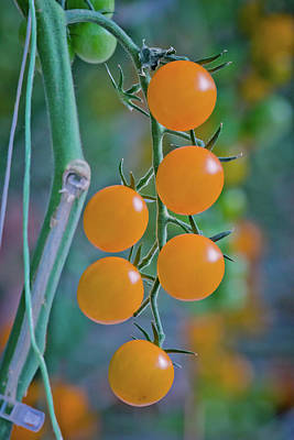 Photograph - Beautiful Cherry Tomatoes by Linda Unger