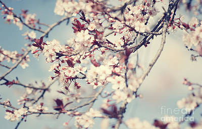 Photograph - Beautiful Cherry Tree Blossom by Anna Om
