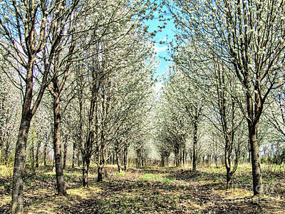 Photograph - Beautiful Country Walk by Dan Carmichael