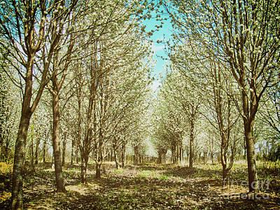 Photograph - Beautiful Country Walk Fx by Dan Carmichael