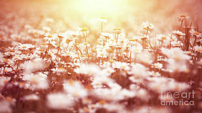 Photograph - Beautiful Daisy Flower Field by Anna Om