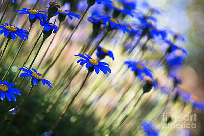 Photograph - Beautiful Dancing Blue Flowers Romance by Joy Watson