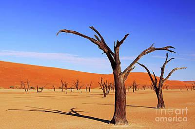 Photograph - Beautiful Dead Vlei, Namibia by Wibke W