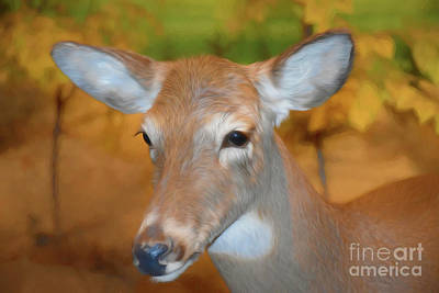 Photograph - Beautiful Deer 2 by Ray Shrewsberry