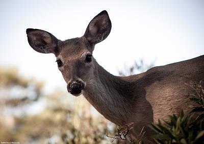 Photograph - Beautiful Deer  by Debra Forand