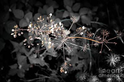 Photograph - Beautiful Dryness by Michelle Meenawong