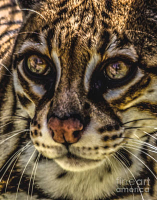 Photograph - Beautiful Eyes by Ken Frischkorn