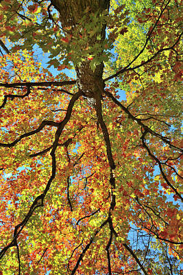 Photograph - Beautiful Fall Colors In Cook County by Ray Mathis