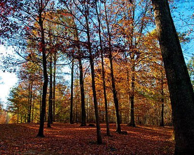 Indiana Landscapes Photograph - Beautiful Fall by Melissa  Riggs