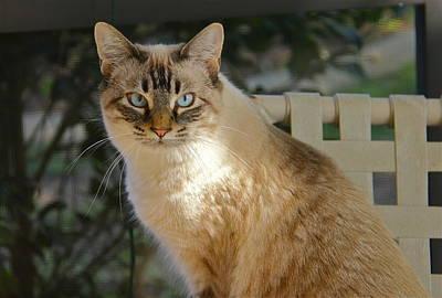 Photograph - Beautiful Feline by Denise Mazzocco