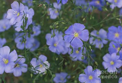 Photograph - Beautiful Flax by Cheryl Baxter