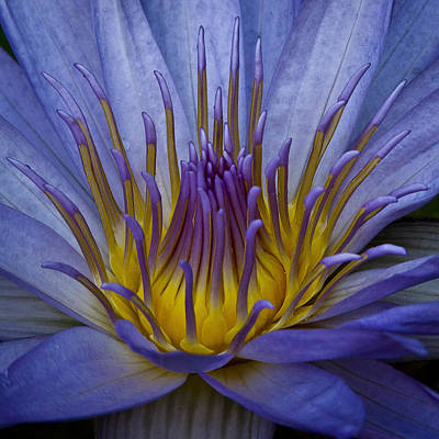 Photograph - Beautiful Flower by Wes and Dotty Weber