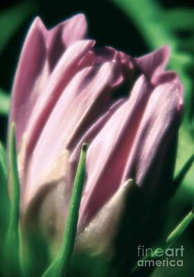 Photograph - Beautiful Flower by Janice Spivey
