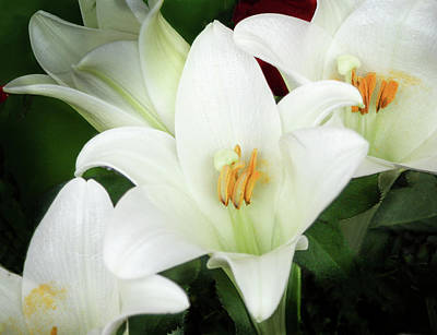 Photograph - White Lily by Mark Coran