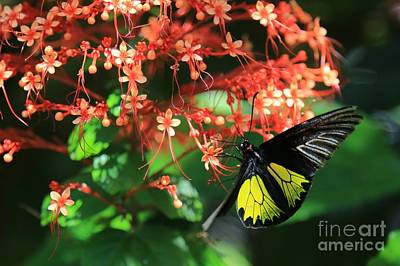 Photograph - Beautiful Flowers Beautiful Butterfly by Carol Groenen