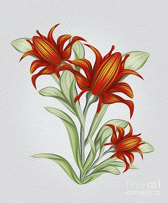 Floral Royalty-Free and Rights-Managed Images - Beautiful Flowers by Sarah Kirk