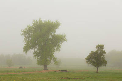 Photograph - Beautiful Foggy Country Springtime Morning by James BO Insogna