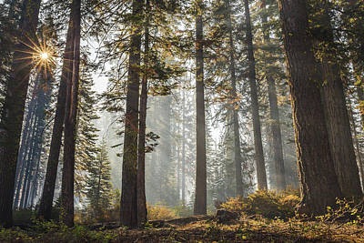 Photograph - Beautiful Forest by Davorin Mance
