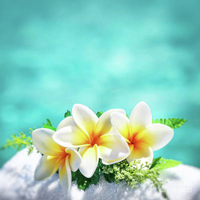 Photograph - Beautiful Frangipani Flowers by Anna Om