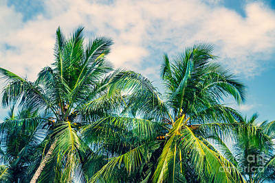 Photograph - Beautiful Fresh Green Palm Trees by Anna Om
