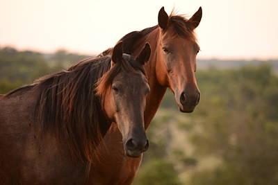 Photograph - Beautiful Friends by Vonda Barnett