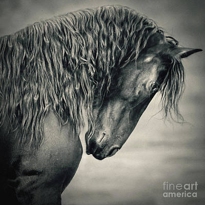 Photograph - Beautiful Friesian Horse Stallion by Dimitar Hristov