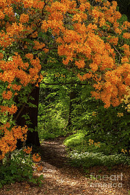 Photograph - Beautiful Garden Canopy Of Azaleas by Mike Reid