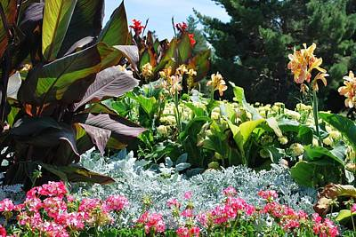 Photograph - Beautiful Garden Plants - Pink, Blue And Red by Matt Harang