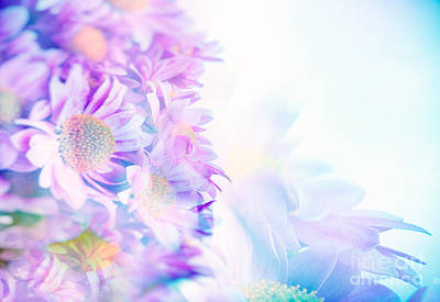 Photograph - Beautiful Gentle Daisy Flowers by Anna Om