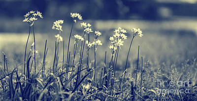 Photograph - Beautiful Gentle Wildflowers by Anna Om