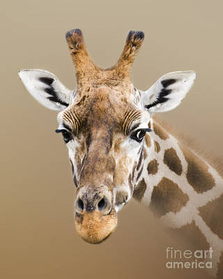Photograph - Beautiful Giraffe by Linsey Williams