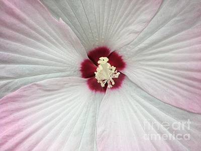 Photograph - Beautiful Hibiscus Macro by Jeannie Rhode