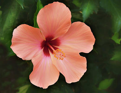 Photograph - Beautiful Hibiscus Wall Art by Georgiana Romanovna
