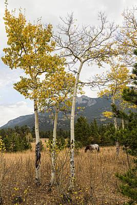 Wild Horses Photograph - Beautiful Horse Autumn Aspen Trees Grove Grazing by James BO  Insogna
