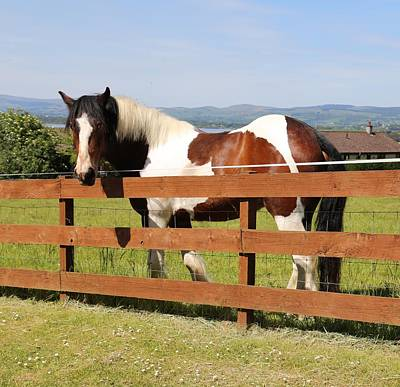 Photograph - Beautiful Horse In Kinneswood by Caroline Reyes-Loughrey