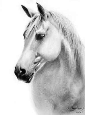 Equine Art Drawing - Beautiful Horse Libby by Danguole Serstinskaja