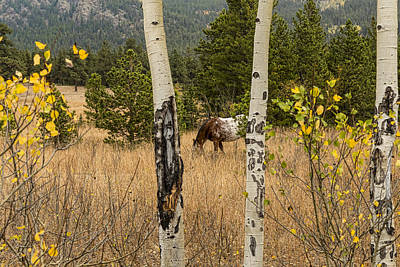 Photograph - Beautiful Horse Through The Aspen Trees Trunks by James BO  Insogna