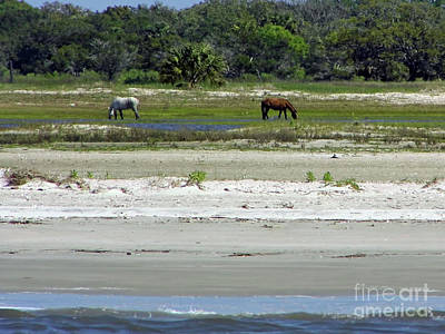Photograph - Beautiful Horses At The Beach by D Hackett