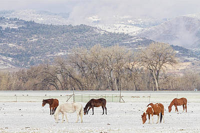 Photograph - Beautiful Horses Geese And Snow by James BO Insogna