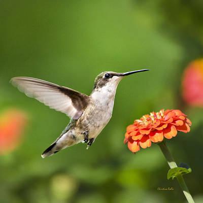Beautiful Hummingbird Square Art Print by Christina Rollo