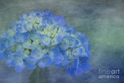 Photograph - Beautiful In Blue by Linda Blair