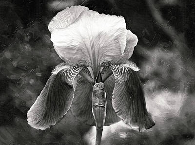 Photograph - Beautiful Iris In Black And White by Trina Ansel